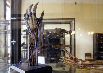 muzeum-katedry-i-anatomii-uj